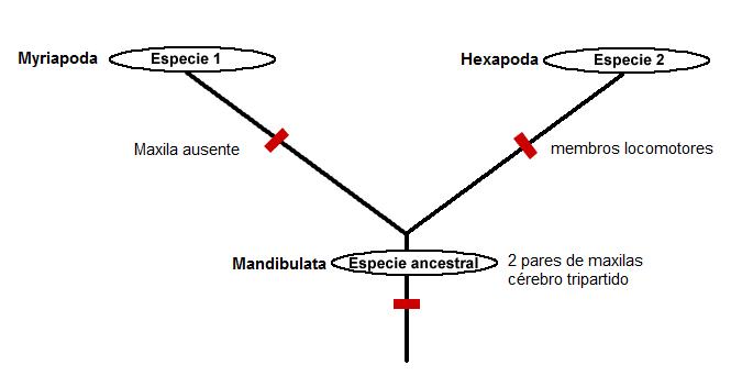 Cladogramasimple